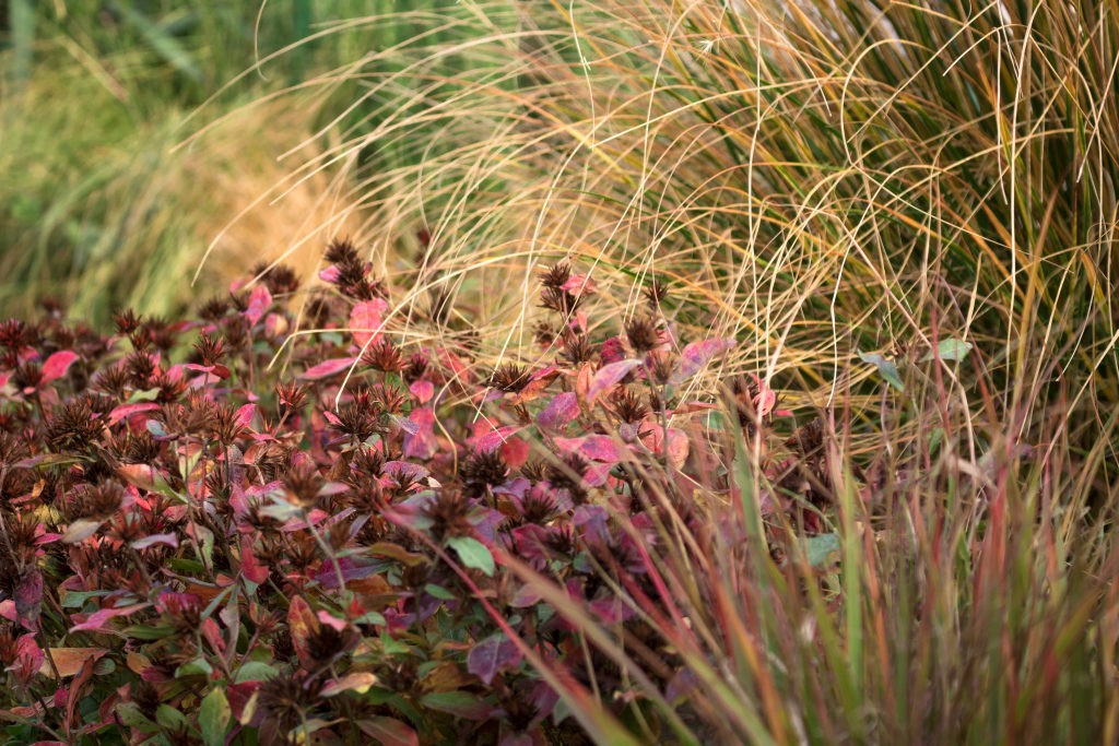 Gräserkombination für Herbstzierde